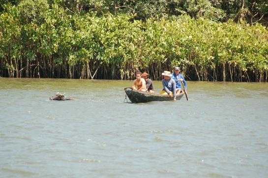 Crossing catle Preguiças's river